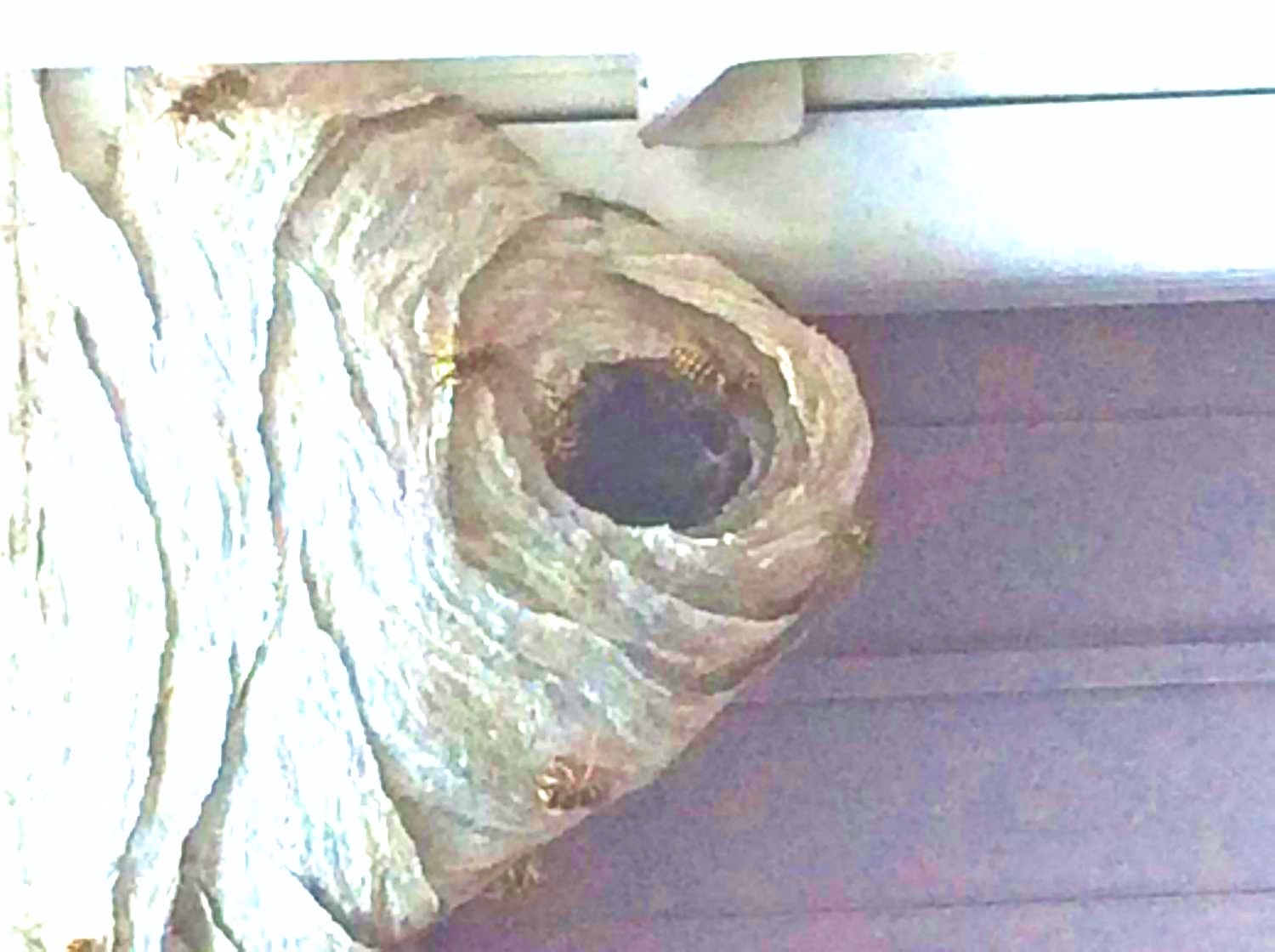 The Hull Truth Boating And Fishing Forum Hornet Nest Id